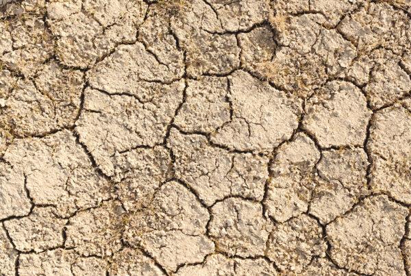 Impatto ambientale: panoramica delle principali iniziative
