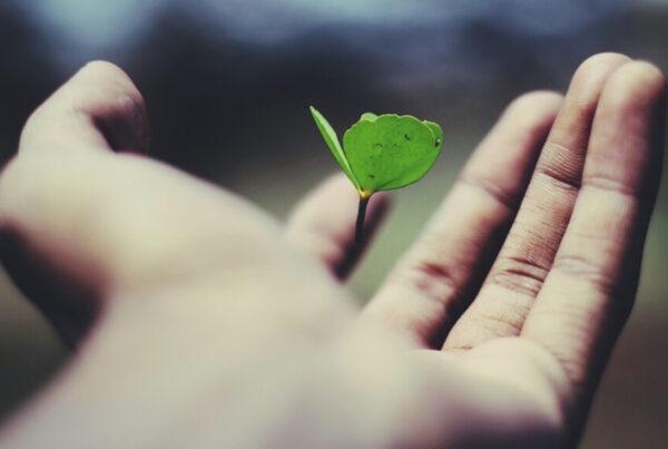 Strategie di Riduzione dell'Impatto Ambientale con Process Factory